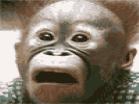 Crazy Monkey JigsawHacked
