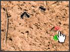 Ant SplatHacked