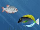 Hungry Piranha Hacked