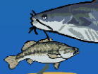 Little Bass Survival Hacked